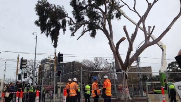 Article image for Parkville tree cut down after protesters removed by police
