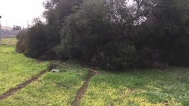 Article image for Man dies after hitting tree at Lalor