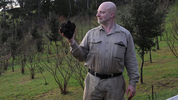 Article image for Yarra Valley truffle grower may have uncovered a record-breaking truffle