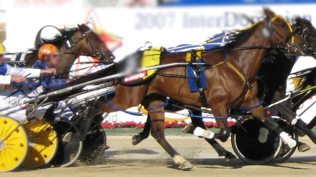 Article image for Police make arrests over alleged Harness Race fixing at Cobram