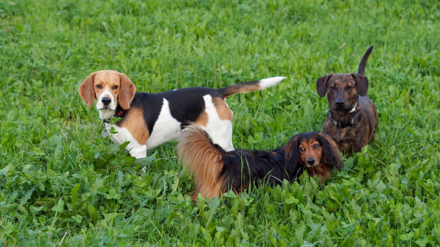 Article image for Hungarian researchers find dogs can understand what we say and how we say it