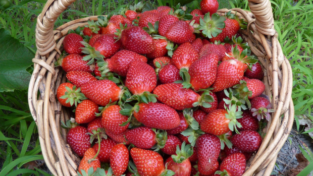 Article image for Good news: there's nothing suspicious about really cheap strawberries