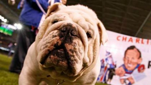 Article image for UPDATE: Sid The Bulldog mascot WILL be at the AFL Grand Final