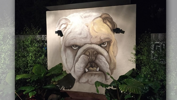 Article image for Ross and John speak with the Bulldogs fan with huge bulldog mural in his backyard