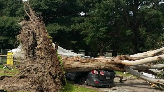 Article image for 3AW listener has car crushed by tree in weekend wind