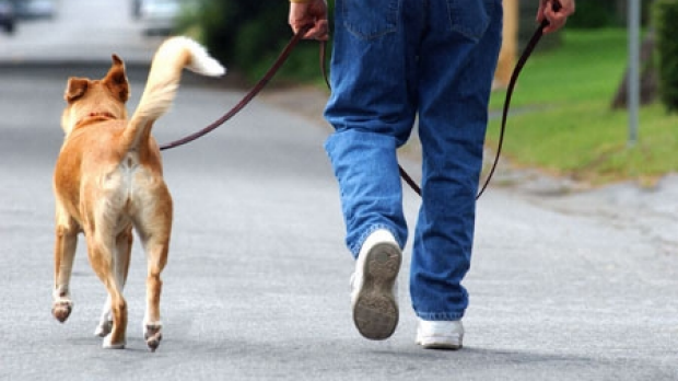 Article image for Tom Elliott calls for dogs to be genetically tested to help identify their owners