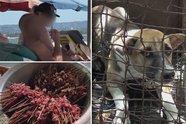 Article image for Australian tourists are unwittingly eating dog meat in Bali