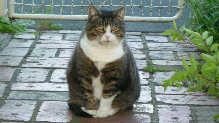 Article image for Missing cat returned after eight years