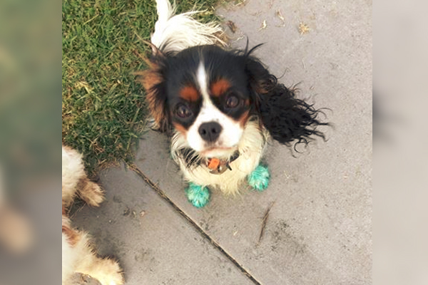 Article image for Dogs feet turn green after walking through 'Round Up' at Williamstown park