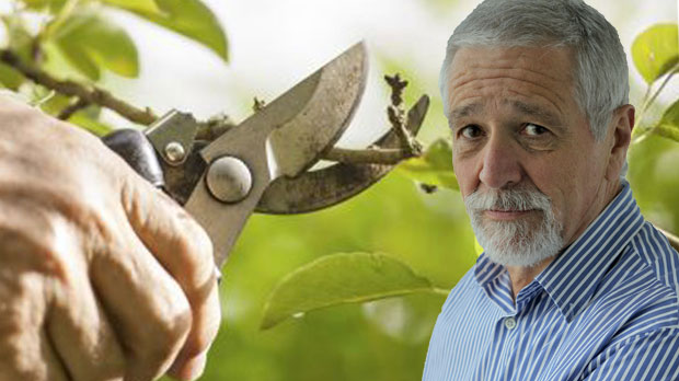 Article image for Tree cutters scam elderly woman's life savings