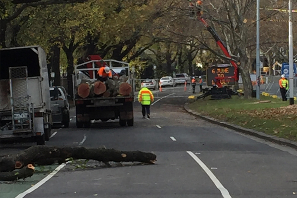 Article image for Trees cut down on St Kilda Road to make way for the Metro Rail Tunnel