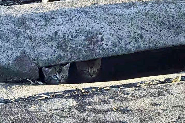 Article image for Dingley Village locals' six-hour vigil to save stuck kittens