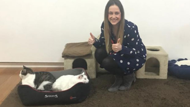 3AW Drive checks out Melbourne's Cat Cafe!