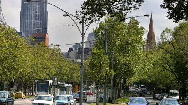 Article image for City of Melbourne to be compensated for trees removed for Metro Rail