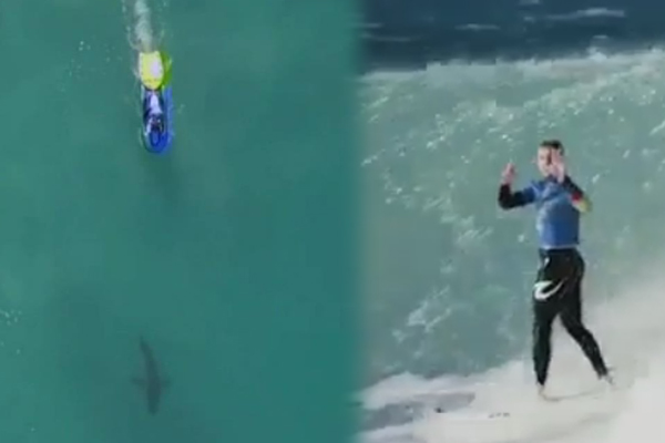 Article image for Great white shark forces Mick Fanning out of the water at South Africa