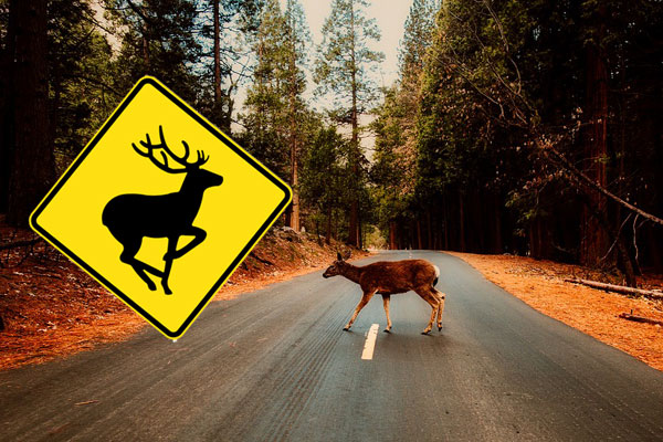 """Article image for Thefts of road signs """"popular in man caves"""" blamed for deer and car collisions"""