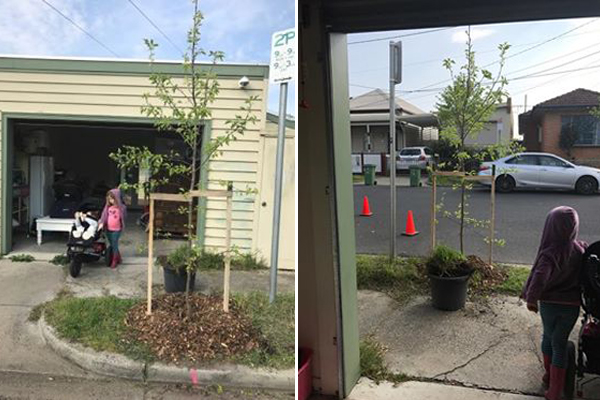Article image for Rumour File: Council plants tree in front of garage