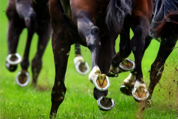 Article image for Caulfield Cup favourite suffers injury, out of Spring Carnival