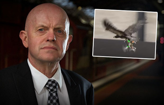 Article image for Drone-hunting sea eagles being trained by police, could soon be unleashed in Victoria