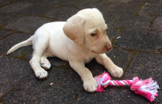 Article image for Beloved pup stolen in home invasion returned