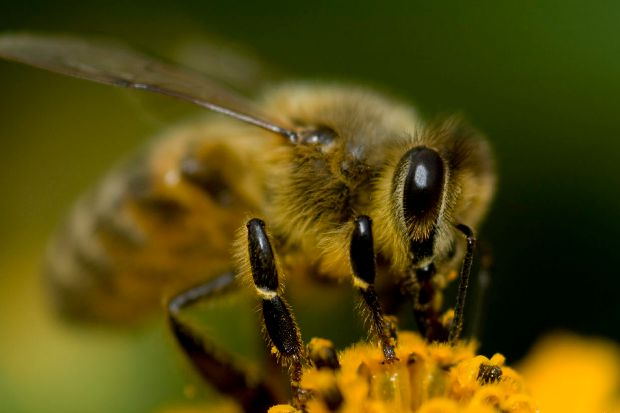 Article image for A bee sting can be far more dangerous than you think, expert warns