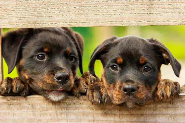 Article image for Sale of puppies and kittens in pet shops banned