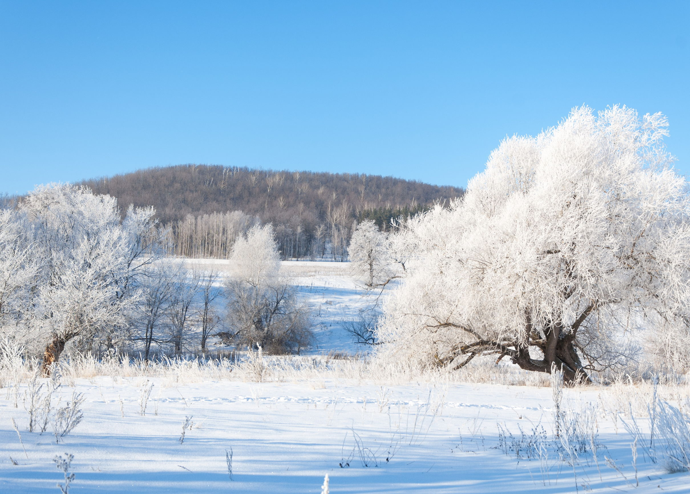 Imagine living in Siberia with temperatures down to minus 50
