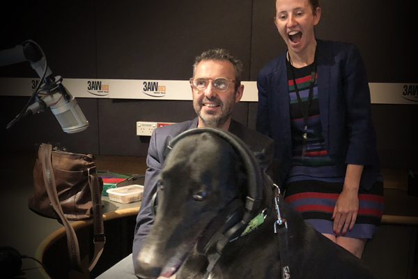 Article image for 3AW goes to the dogs in new greyhound adoption push