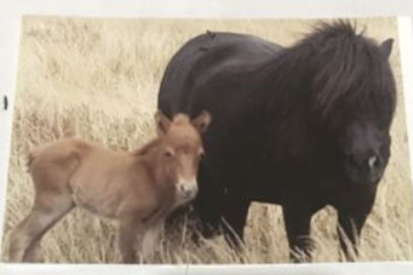 Article image for Devastated farmer makes emotional plea for return of miniature ponies