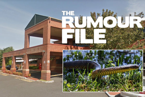 Article image for Rumour update: Tiger snakes spotted in hospital grounds