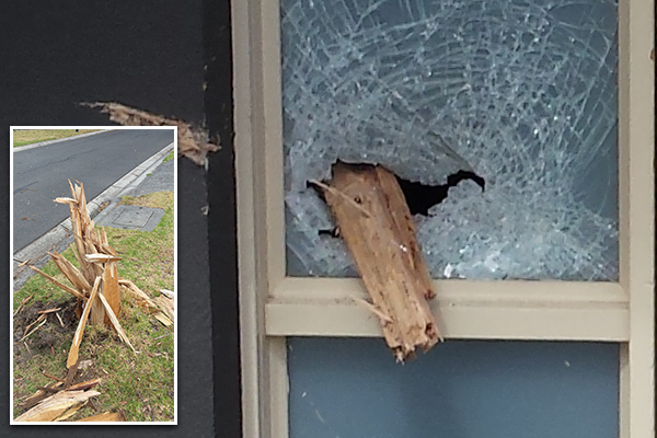 Article image for Photos: Lightning turns tree into dangerous spear that smashes through front door