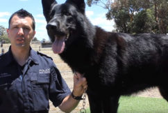 Nine police dogs contract illness in almost 'unheard of' circumstances