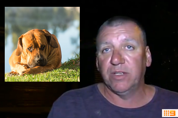 Article image for Concerning details emerge about the history of Berwick mauling dog