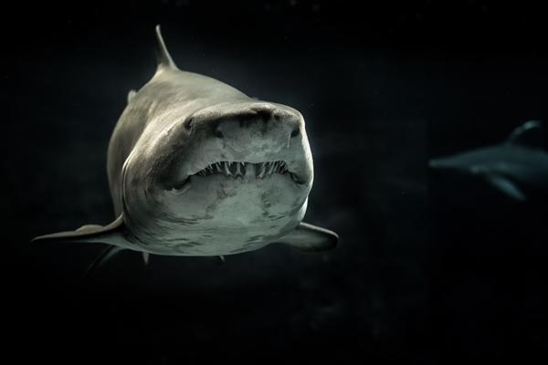 Article image for LED lights ward off shark attacks