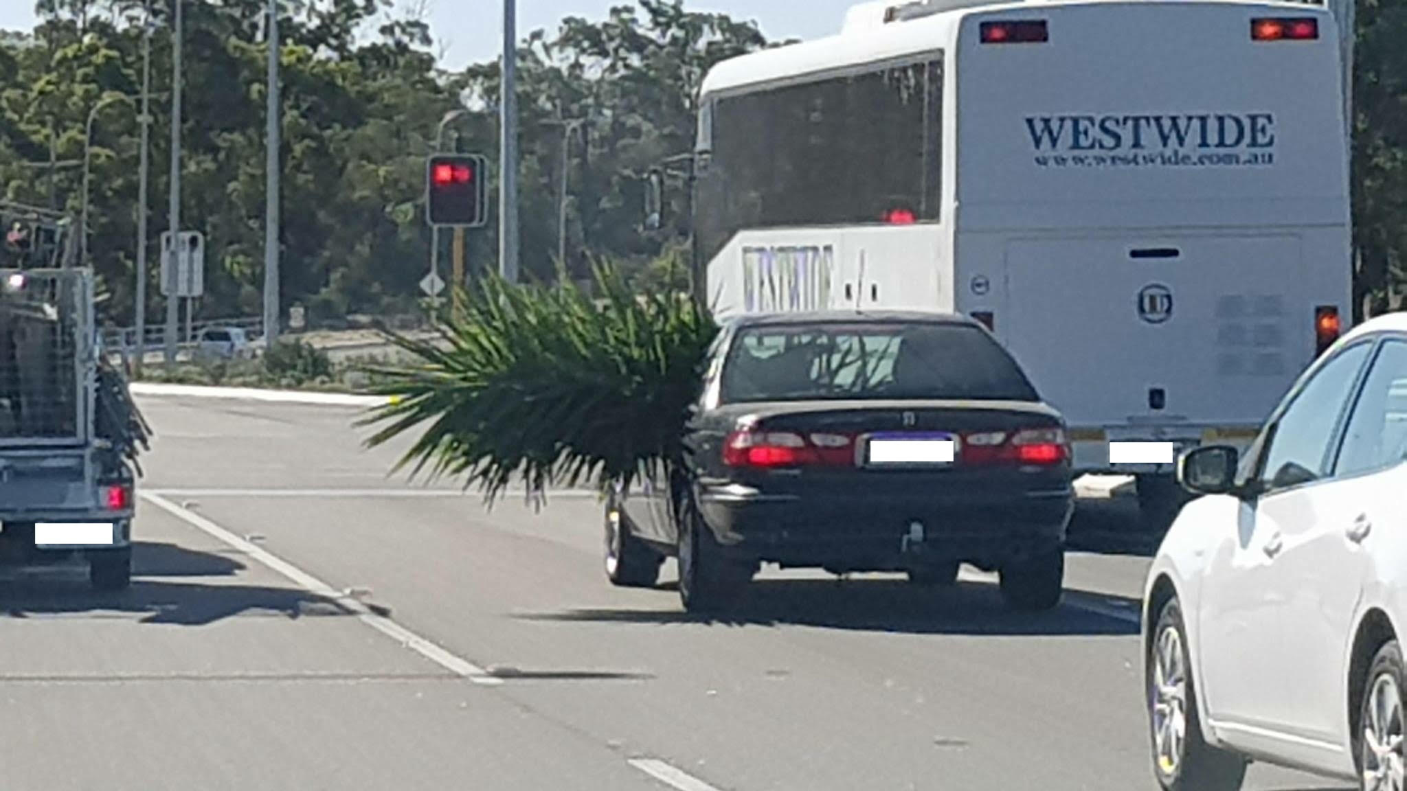 Article image for Yuk: Car stuffed with enormous plant gives new meaning to 'road spikes'