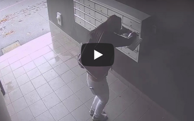 Article image for CCTV: Collingwood mail theft duo caught on camera