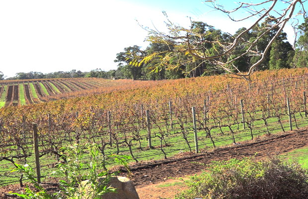 Article image for Western Australia road trip: tips for exploring the wine region of the South West!