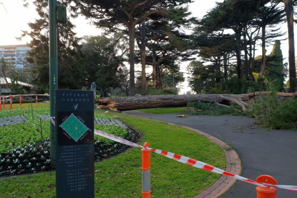 Article image for A tremor, a landslide and hundreds of trees down: Wild night for SES across Victoria
