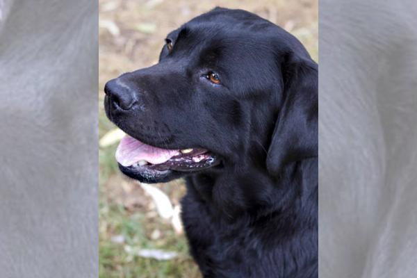 Article image for Desperate owners offer $10,000 reward for beloved lost dog