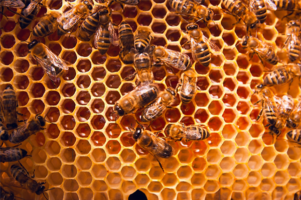 """Article image for Capilano and major supermarkets deny accusations of selling """"fake honey"""""""