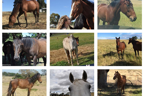 Article image for Toxic firefighting foam likely to blame for death of 10 horses, owner claims