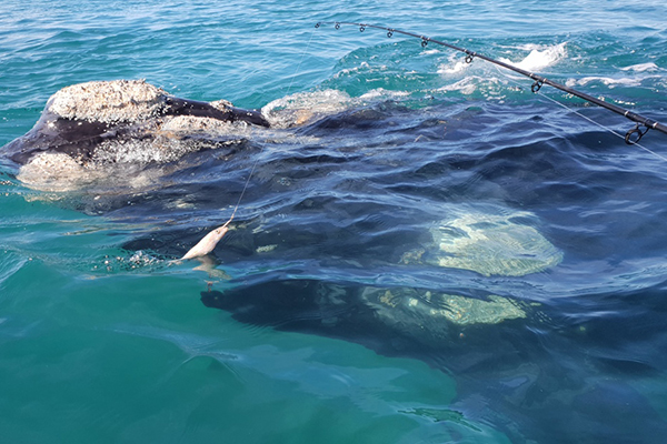Article image for WATCH: Kayaker films close encounter with curious whale