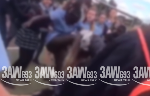 Article image for Horrifying vision emerges of girls brawling at school