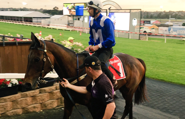 Article image for Hundreds flock to Moonee Valley to watch Winx tune up for historic Cox Plate