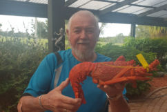 The great Flinders Island Crayfish crisis is solved!