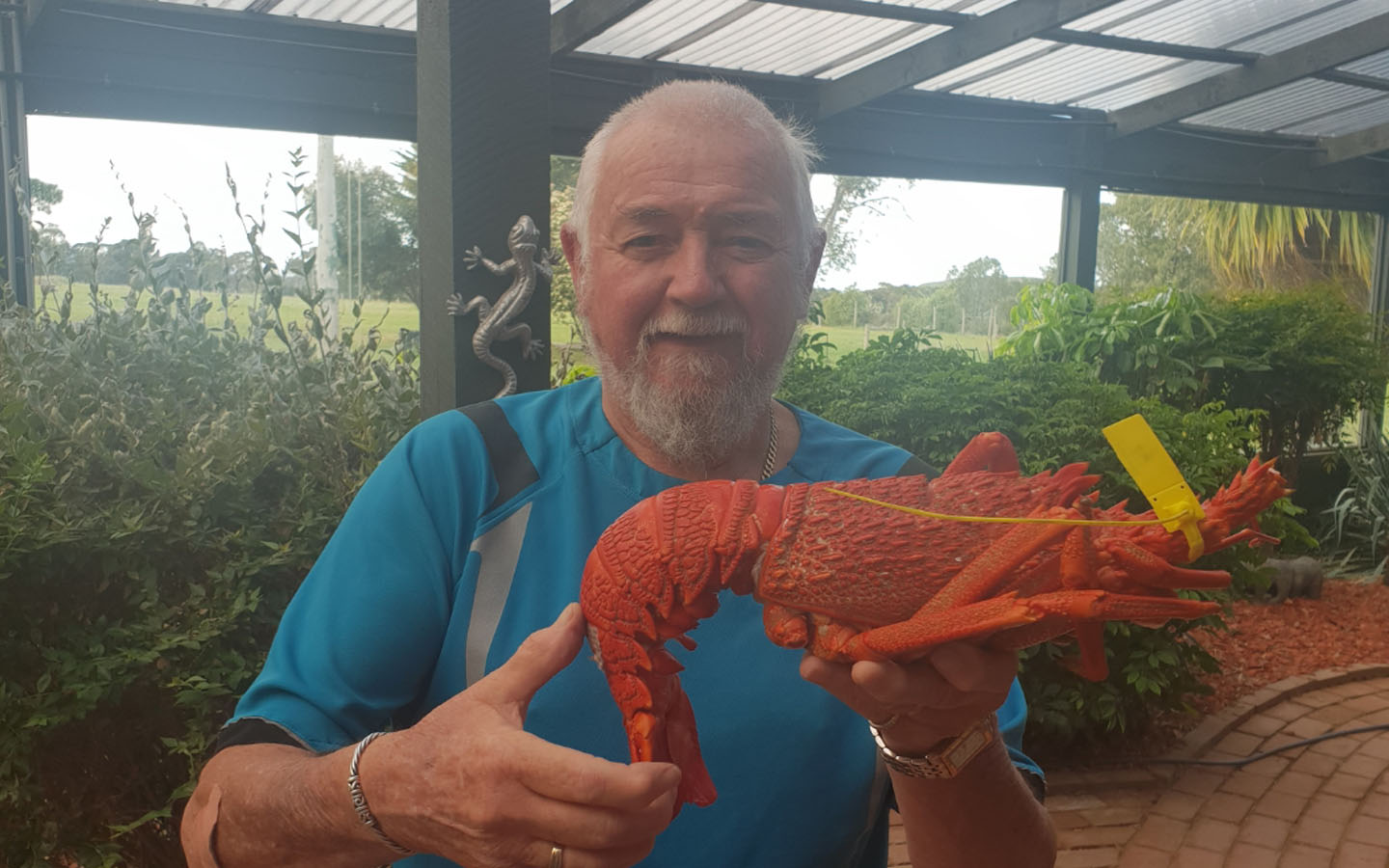 Article image for The great Flinders Island Crayfish crisis is solved!