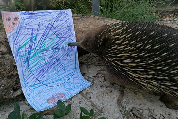 Article image for Good news for poor Matilda the echidna and the ant allergy causing her grief!