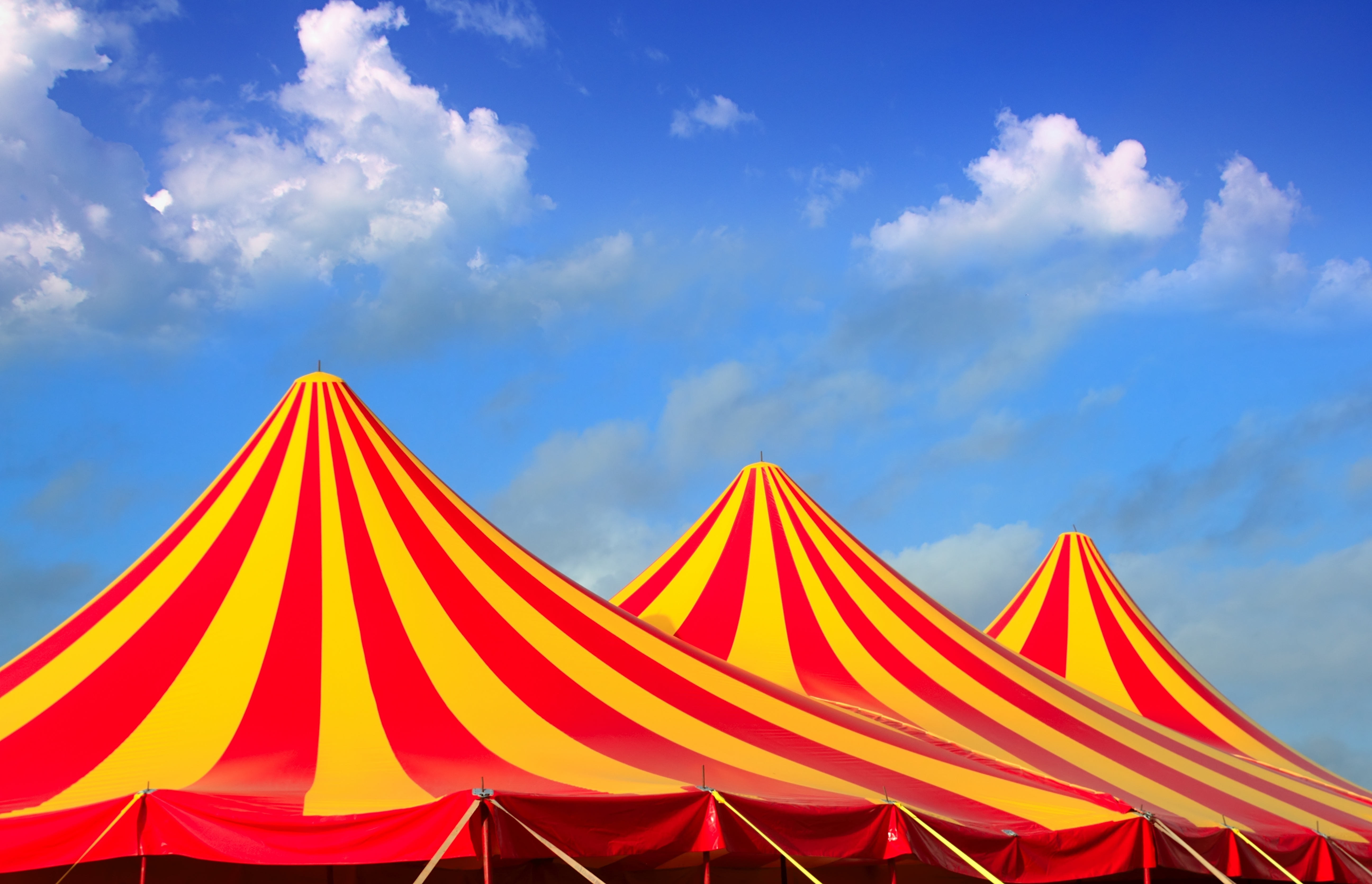 Article image for Wodonga councillor concerned at potential rammifications after resolution banning circus animals on council land was passed