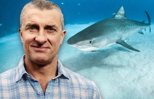 Article image for Tom Elliott hits back at calls for shark cull