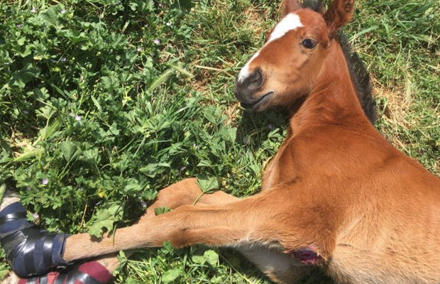 Article image for Foal stolen from racing stable found dead